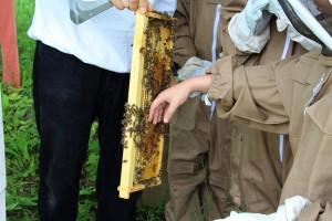 Takto sa hladkajú včely